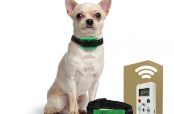 Dog Training Collars for Small Dogs