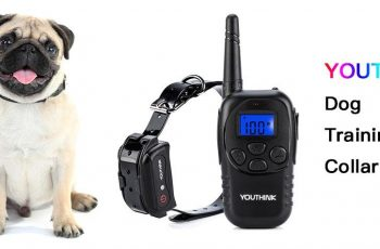 dog shock collar for small dogs