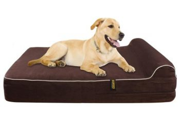 memory foam beds for dogs