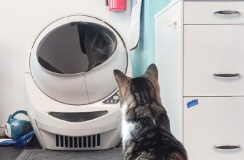 self cleaning litter box for cats