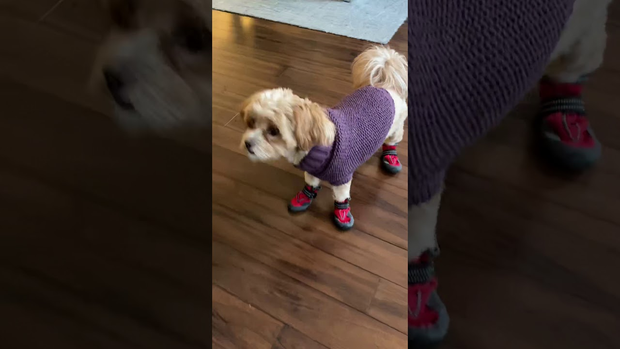 Baby HOPIA'S trying on her snow boots for the first time.